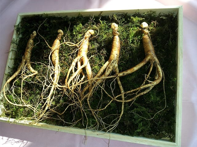 top 5 benefits of Panax Ginseng