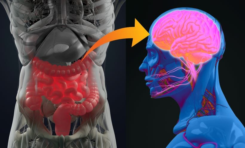 what is the gut and brain connection