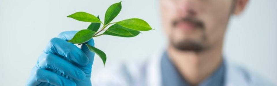 adult scientist holdig plant-2280551