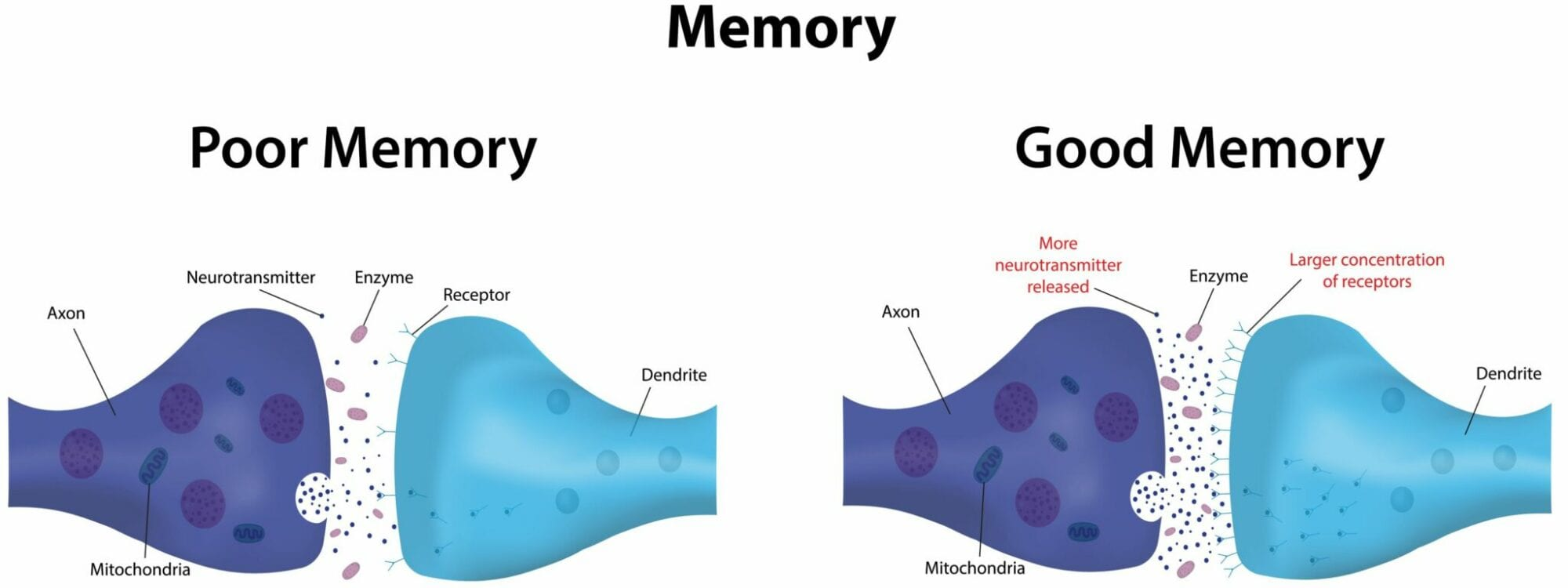 Does Choline Help Prevent Dementia and Alzheimer's? 1